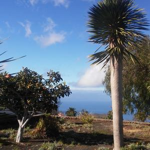 Fruit and dragon trees in the garden of the Casa de las Estrellas